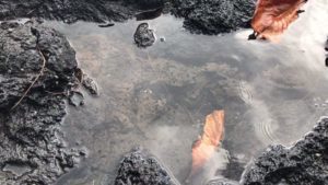 Puddle in lava